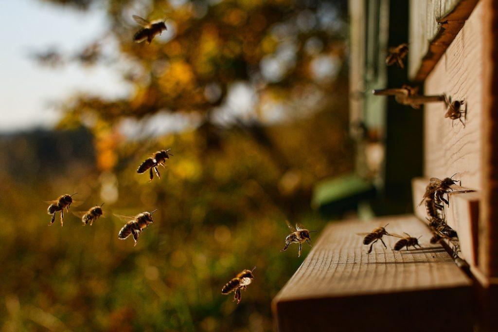 Les-bienfaits-des-produits-de-la-ruche-2