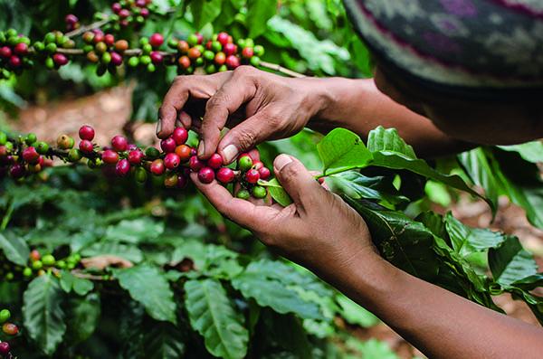 culture café bio commerce équitable