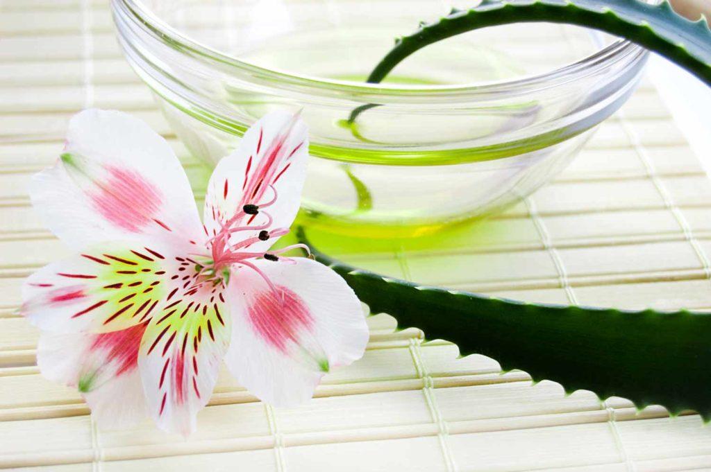 Aloe vera cosmétique biocoop