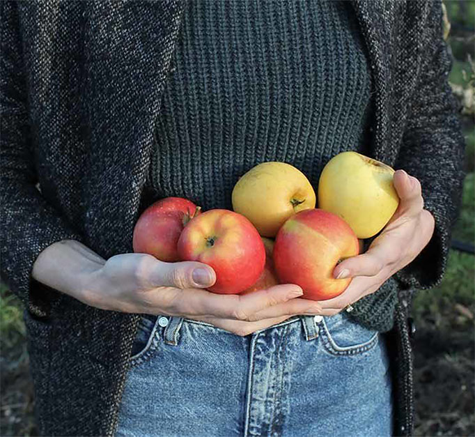 Coteaux-nantais-pommes-e1629276545497 copie